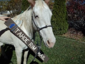 Tahoe Rim Trail Equine Trail Talk