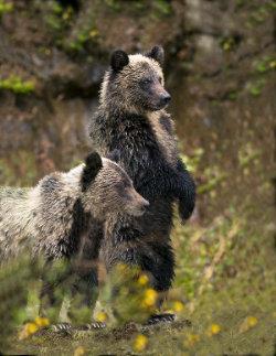 jumbo_bear